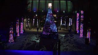 """""""Рождественские джунгли"""" в зоопарке Лос-Анджелеса"""