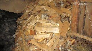 «Золотые» дрова