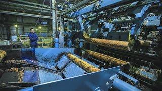Миллиард рублей в федеральную казну попало от югорских лесопромышленников