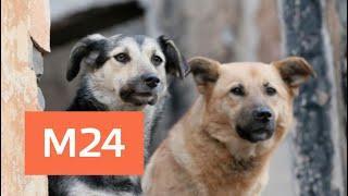 Жительница подмосковной Истры рассказала о нападении на нее бродячих собак - Москва 24