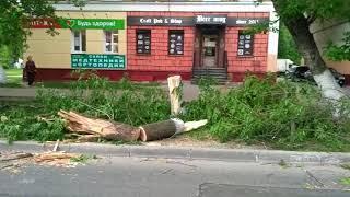 На проспекте Ильича оперативно распили упавшие деревья после урагана