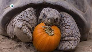 Мудрая и медленная: день черепахи. Студия 11. 23.05.18