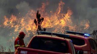 Леса Португалии снова в огне