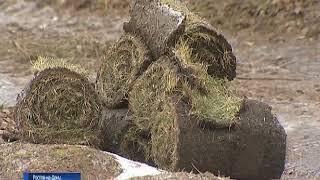В. Кушнарёв: «зимний» газон в Ростове - на гарантии подрядчика