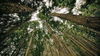 Лесоводы Югры покажут результаты работы на выставке «Годичное кольцо»