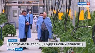 Крупнейший в Сибири тепличный комбинат «Индустриальный» готовят к продаже