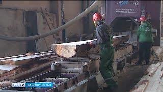 В Башкирии увеличатся объёмы заготовки и поставки древесины