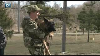 В Омске ставят спектакль о подвигах собак в годы войны