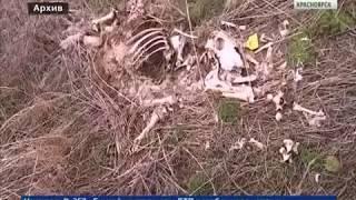 В Зыково появилась очередная незаконная свалка