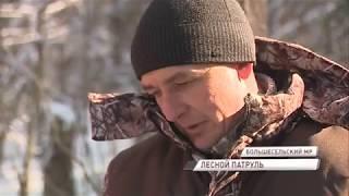 Лесные дружинники по всей области помогают выявлять нарушения