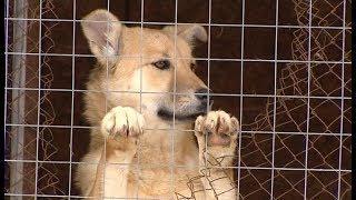 Собаки с полигона ТБО Ханты-Мансийска срочно ищут хозяев