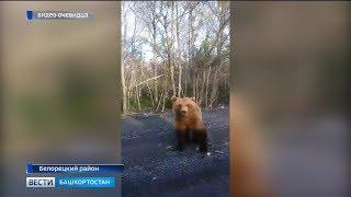 В Башкирии медведь попал в объектив камеры