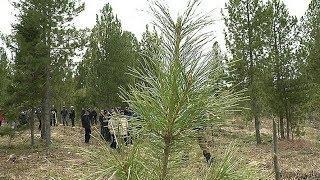 В качестве компенсации в Ханты-Мансийске высадили лес