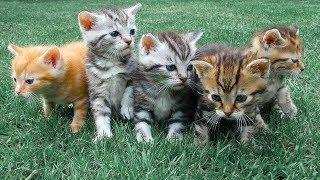 Как правильно обращаться с кошками. Интервью Дмитрия Куклачева