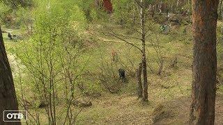 Две сотни екатеринбуржцев вышли на субботник в Шарташском лесопарке