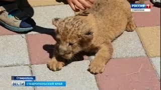 В ставропольском зоопарке прибавление