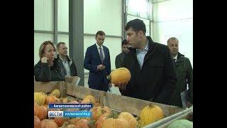 Аграрии продемонстрировали главе региона собранный урожай