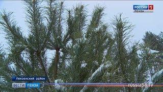 В Пензенской области усилили патрули лесной охраны