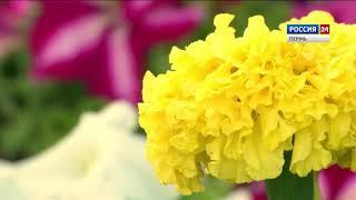 Цветы-однолетники: чем украсить свой сад