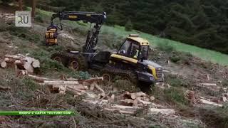 В Курганской области наказаны 7 должностных лиц за вырубку уникального леса