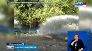 В Нефтекумском округе 35 гектаров озимой пшеницы оказались под ударом пламени