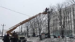 Деревья стригут под Котовского в Хабаровске