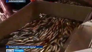 Доступной рыбы станет больше