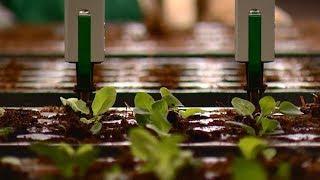 Робот помогает выращивать цветы в Крымском районе Кубани