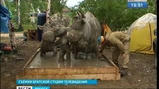 Пёс и кот, дядя Фёдор и Маугли  Фестиваль бетонных скульптур проходит в Братске