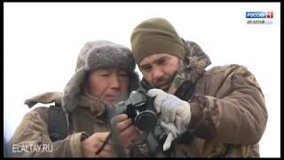 В России подведены итоги ежегодных учетов снежного барса