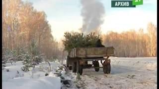 """В Катав Ивановском районе задержали """"черных лесорубов"""""""