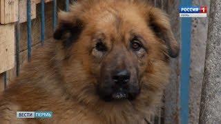Бродячая угроза: как будет работать закон о содержании бездомных животных