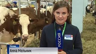 Ярославская область представила свою экспозицию на агропромышленной выставке «Золотая осень»