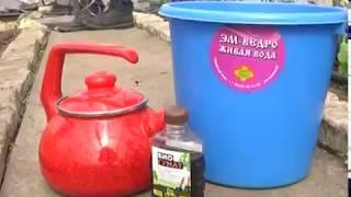 Высадка рассады и биопрепараты от вредителей. Дачные советы от 19.04.2018