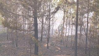 Эксклюзив: на западе Мордовии загорелись леса