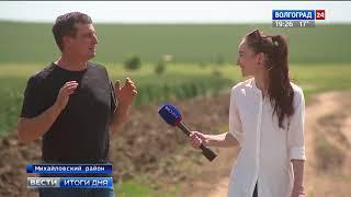 Волгоградские аграрии: к капризам природы привыкли