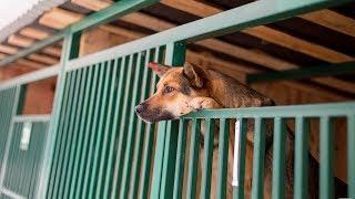 Югорские депутаты защитят права животных