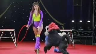 Уникальную программу представят артисты цирка династии Довгалюк  в Биробиджане(РИА Биробиджан)