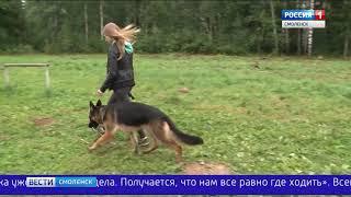 Смоленским владельцам собак негде гулять с питомцами несмотря на специально отведенные площадки