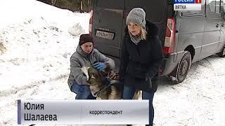 Кировчанин стал призером чемпионата мира по гонкам на собачьих упряжках (ГТРК Вятка)
