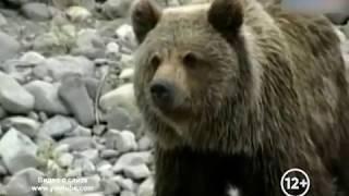 Информация о выходе медведей к людям в Облученском районе ЕАО не подтвердилась