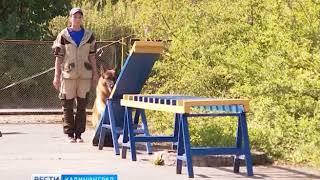 В Калининградской области стартовал первый всероссийский чемпионат спасателей-кинологов