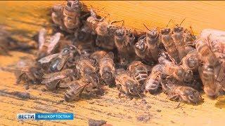 Башкирия экспортирует в Польшу более 2 тонн мёда