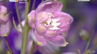 Выставка садовых роз открылась в Иркутске