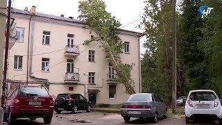 В Великом Новгороде дерево упало на жилой дом