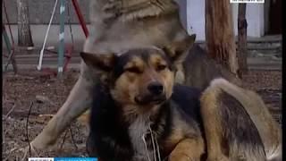 В Солнечном собаки атакуют жителей