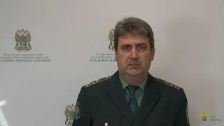 Комментарий начальника таможенного поста Аэропорт Владивосток Кривцова Владимира Юрьевича