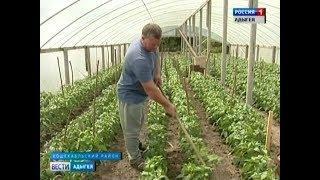 В Адыгее набирают  обороты  тепличные комплексы в личных подсобных хозяйствах