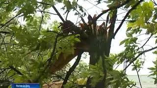 В Ростове в ближайшие часы прогнозируют ветер до 15-20 м/с