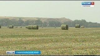 Бескормица грозит востоку Ставрополья